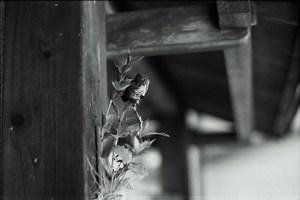Img_0001_50mm